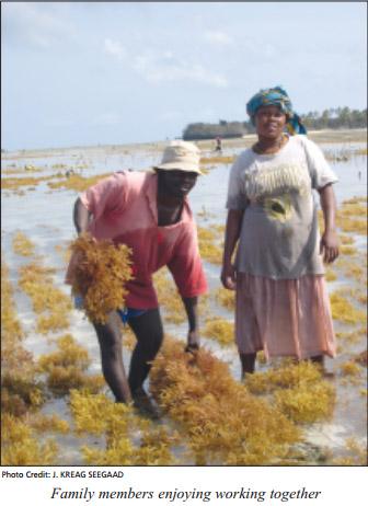 cultivo de algas en Tanzania