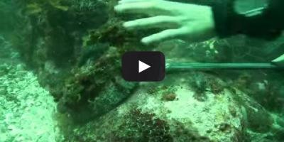 La pesca ilegal de la oreja de mar en Africa