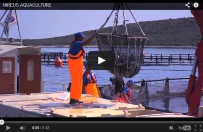piscicultura marina offshore, empresa lider