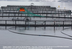 jaulas de acuicultura de peces offshore