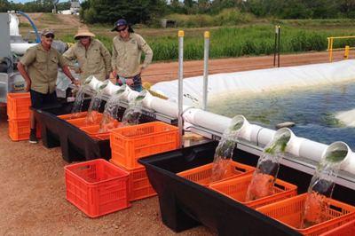 Depuradora de agua con algas
