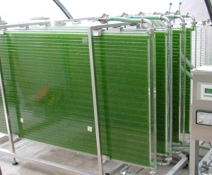 Cultivo de algas en fotobioreactor