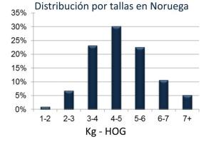 Gráfica con la distribución del salmón comercializado en Noruega según talla