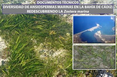 Algas marinas en la Bahía de Cádiz