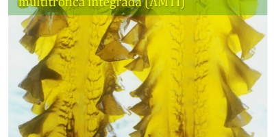 Laminariales en acuicultura multitrófica integrada IMA