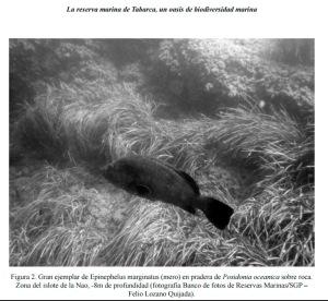 reserva-marina-tabarca-oasis-biodiversidad