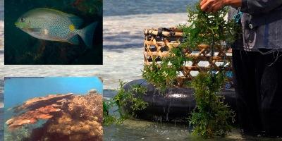 el cultivo de algas es beneficioso