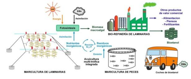 infografía-acuicultura-macroalgas-biocarburantes-multitrofica