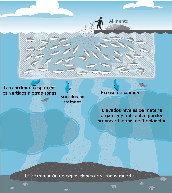 La necesaria planificaci n espacial de la acuicultura en for Construccion de jaulas flotantes para tilapia