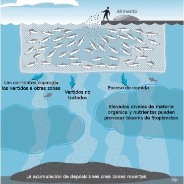 impacto-ambiental-jaulas-de-peces-acuicultura